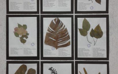 Herbário Bilingue